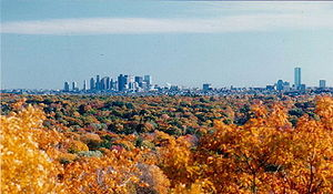 Autumn foliage with a city skyline in the distant background