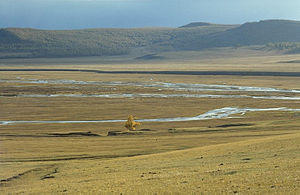 Tree on the Mongolian steppe (June 1997).jpg