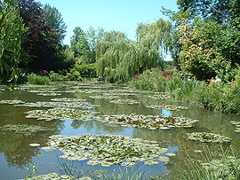 Water lilies in Claude Monet's garden in Giverny