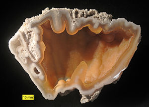 "A piece of translucent pink agatized coral, with a ""ruffled"" appearance along the top edge"