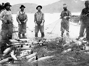 Six men in bib overalls, hats, boots, and other work clothes pull on a large net full of fish. They are standing in the shallows of a big river. Rounded hills rise on the opposite bank of the river.