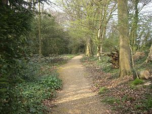 Path covered in sandy gravel winding through open woodland, with plants and shrubs growing on each side of the path.