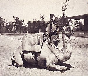 Sitting camel, with soldier behind. Holding a rifle at the slope and wearing a fez. Buildings in the background