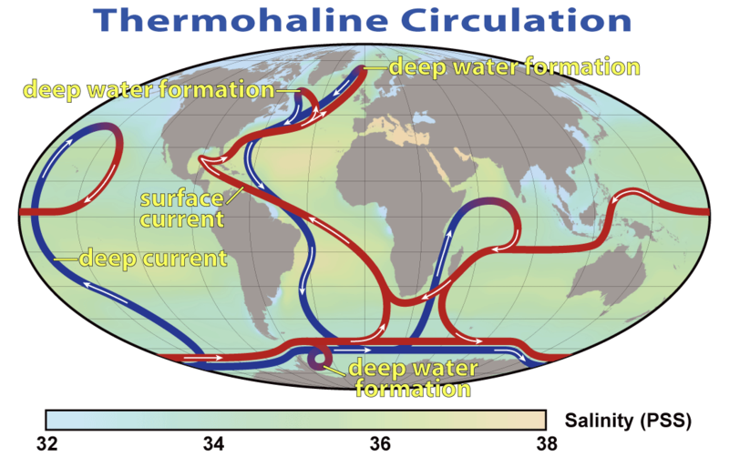File:Thermohaline Circulation 2.png