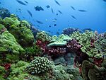 Bed of colourful assorted corals, with view looking up to the surface scattered with fish