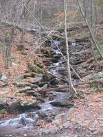 A narrow stream cascades over many rocks in a ravine and enters a larger creek at the bottom. The trees are mostly bare and fallen leaves are on the ground. Several fallen trees and limbs cross the ravine and falls.