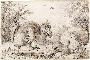 Sketch of three dodos, two in the foreground, one in the distance