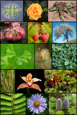 Diversity of plants image version 5.png