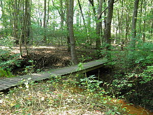 Daylight photograph of wooden bridge over water in a forest