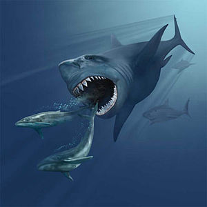 An illustration showing a pod of small, early whales being chased by Megalodon, an extinct giant shark