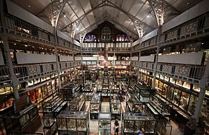 Interior of Pitt Rivers Museum 2015.JPG