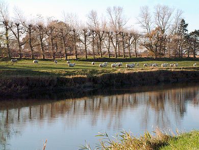 River Rother with sheep and pollarded willows - geograph.org.uk - 45128.jpg