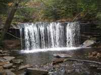 A front-on view of a wide falls. The stream falls as a curtain of water into a plunge pool. It is autumn, with leaves in various stages of color on the trees; some are green and others are orange or yellow.