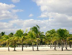 Crandon Park Modified.jpg