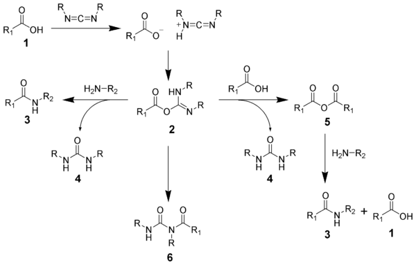 The reaction mechanism of amide formation using a carbodiimide.